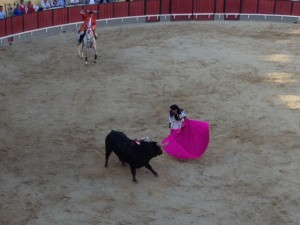 Bullfighters with capes tire out the bull and maneuver him around the ring for the wrestling finale. The bull's horns are shaved down primarily to protect the horses.